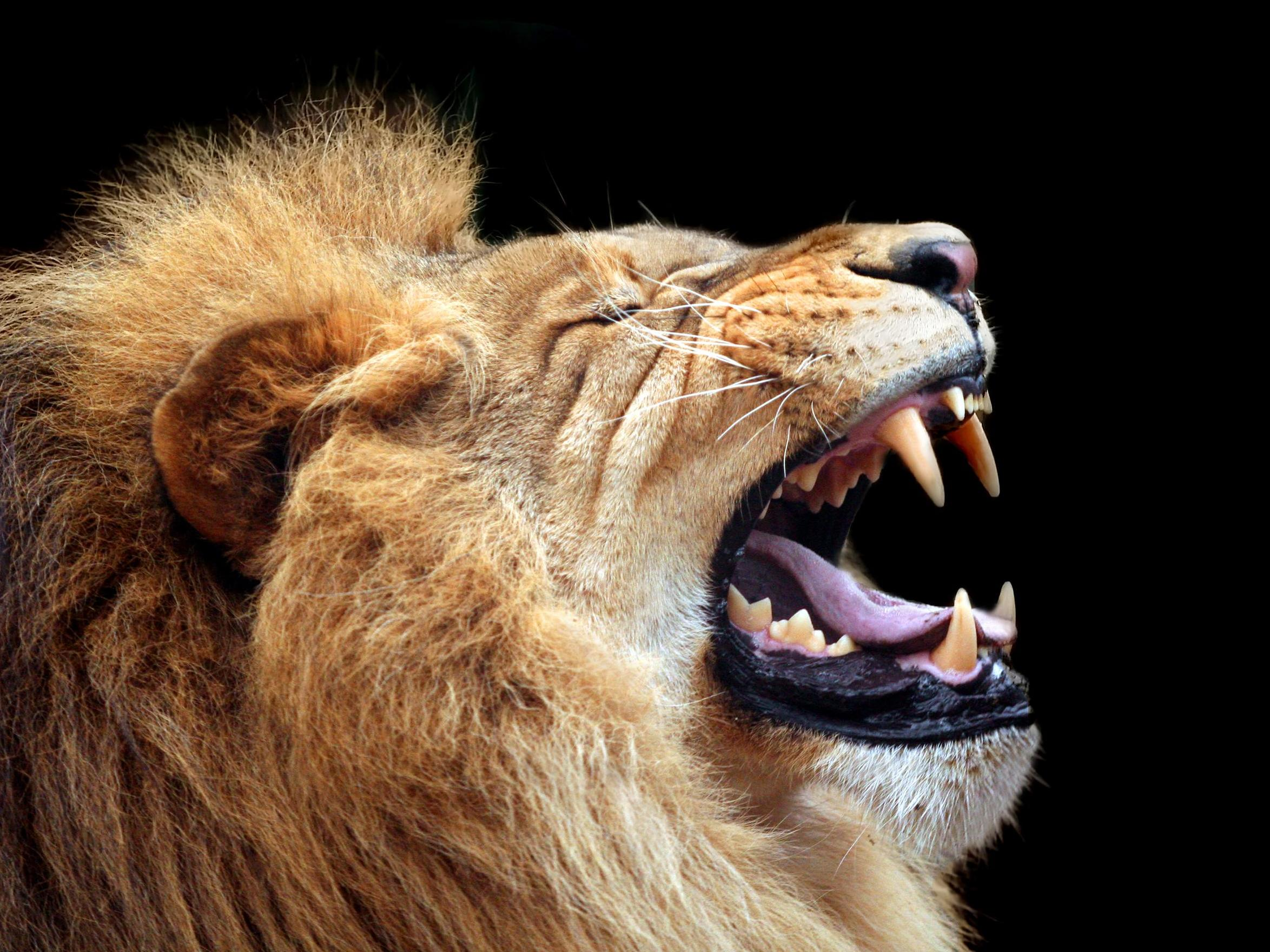 Man sets pet lion on electrician demanding payment for work