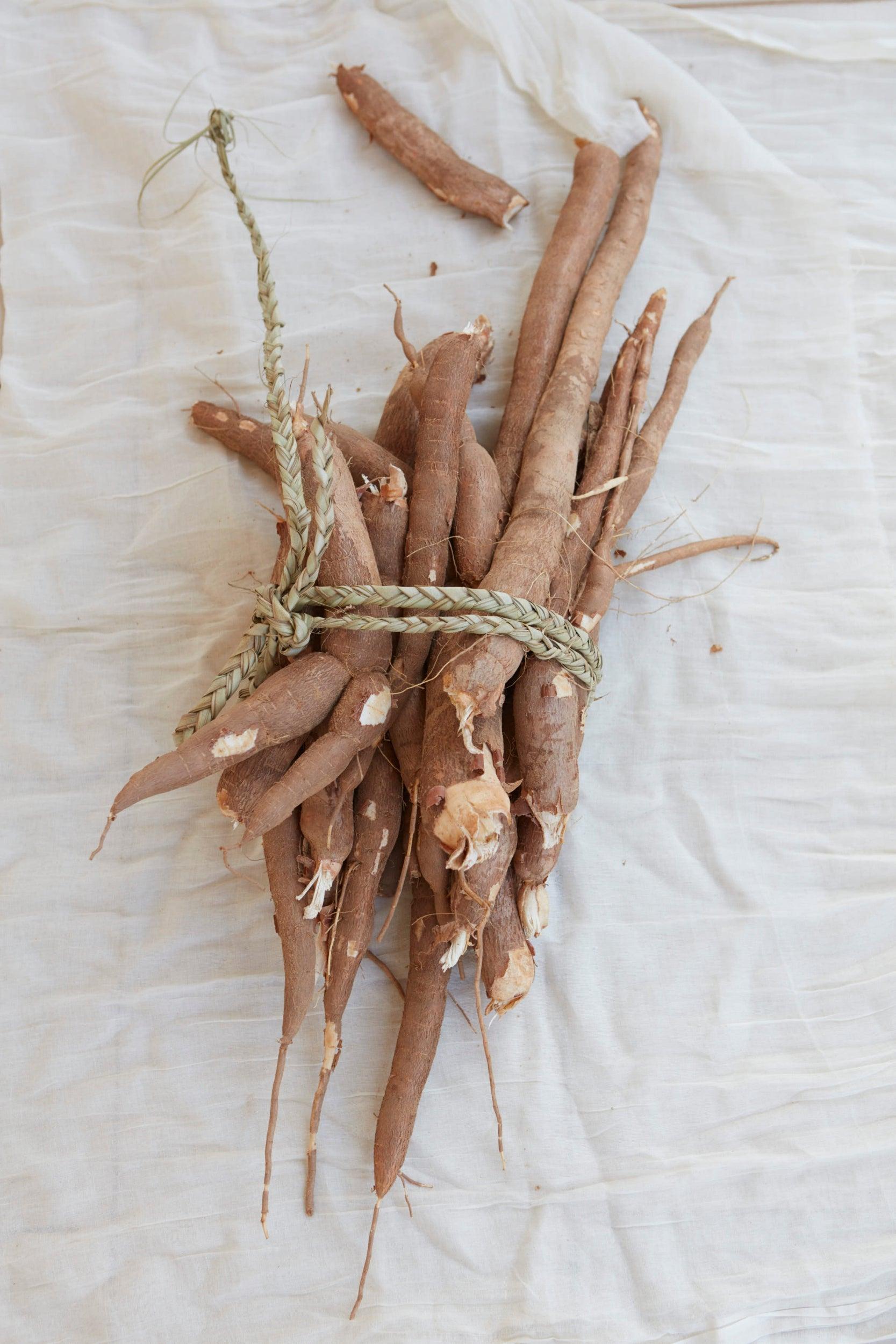 Drought tolerant cassava grown at the Red Cross market garden