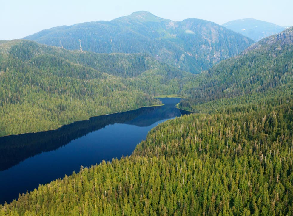 An aerial view of Tongass national forest in Alaska