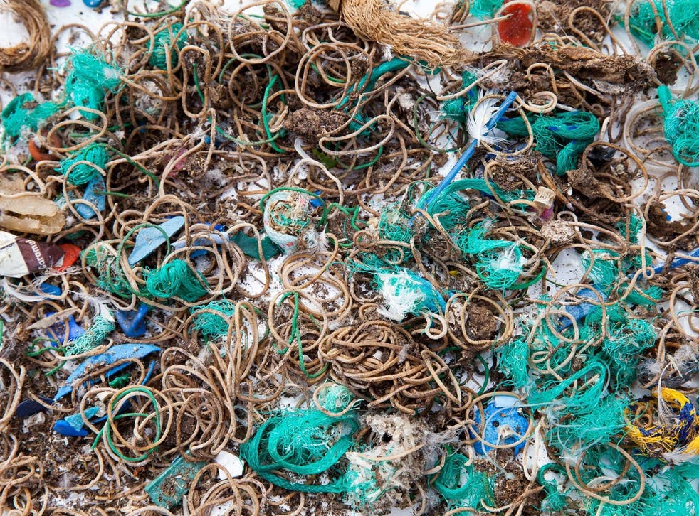 Elastic bands and fishing waste collected from Mullion Island where birds had dropped and regurgitated them
