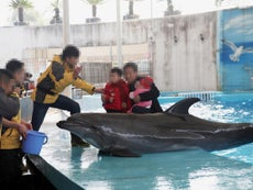 Expedia 'profiting from suffering of 500 dolphins in holiday resorts'