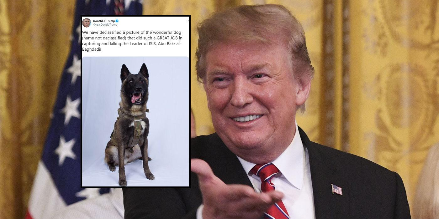 dog that killed abu