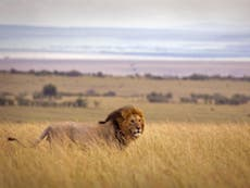 Ministers seek views on trophy imports ban to curb hunting
