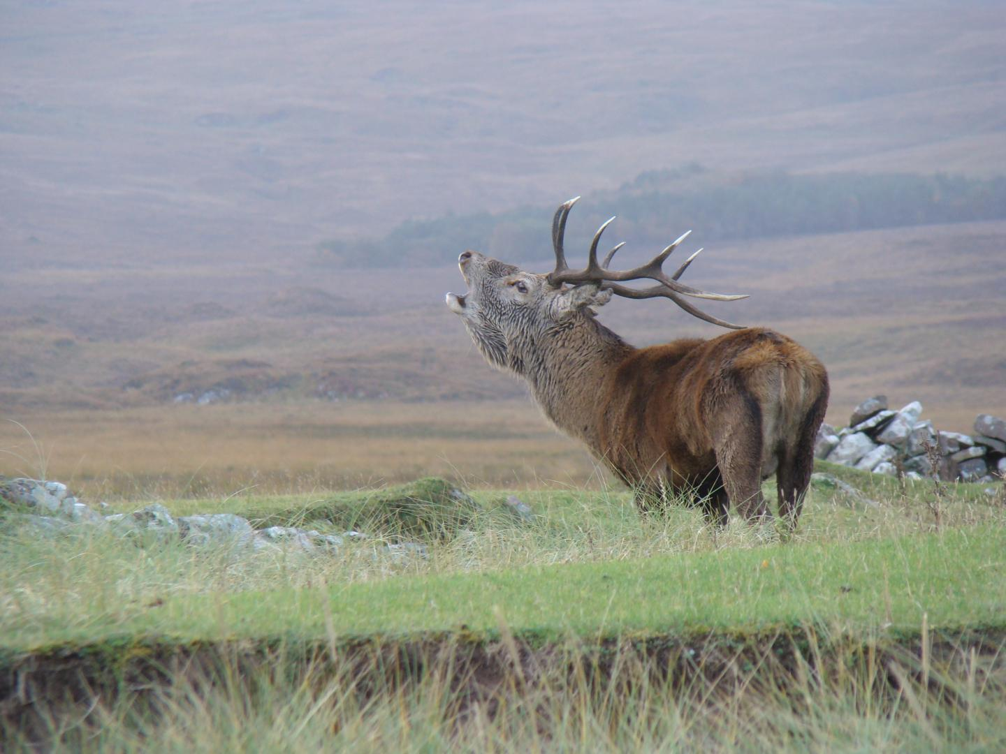 Red deer show first evidence of animal evolution in response to clim…