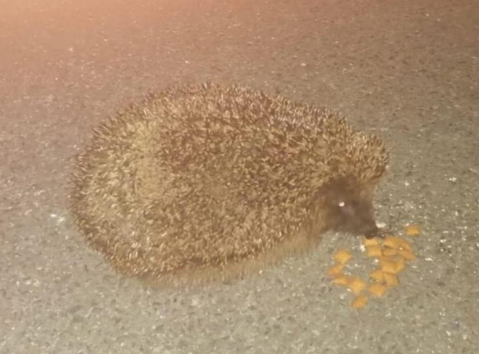 The hedgehog was known as 'Little Man' by local residents in Hayton Close, Sunderland