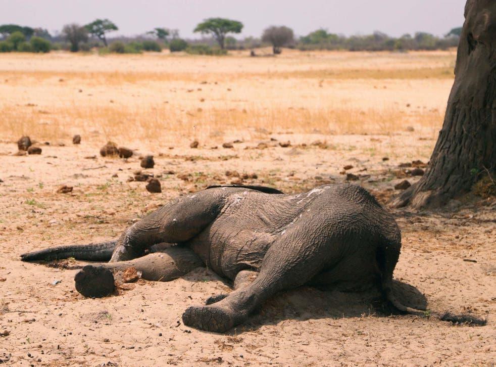 A dead elephant in Hwange National Park, Zimbabwe, 10 November, 2019.