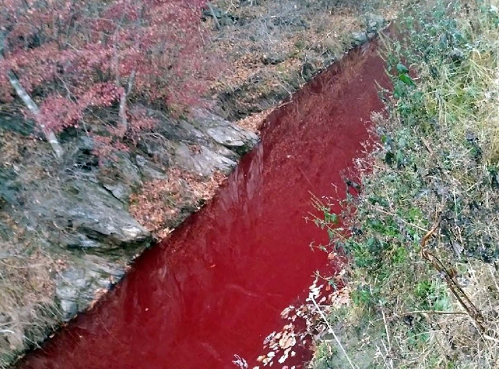 South Korean River Runs Red With Blood Of 47 000 Slaughtered Pigs The Independent The Independent