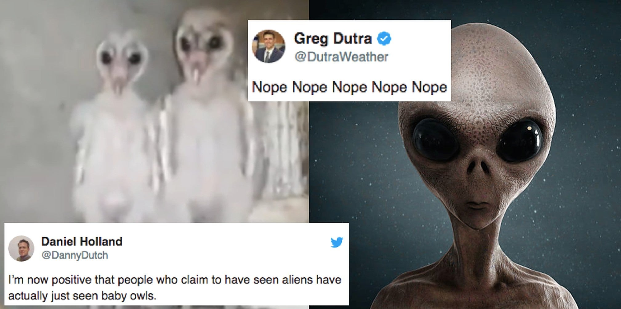 Baby Owls Look Just Like Aliens And People Are Freaked Out Indy100