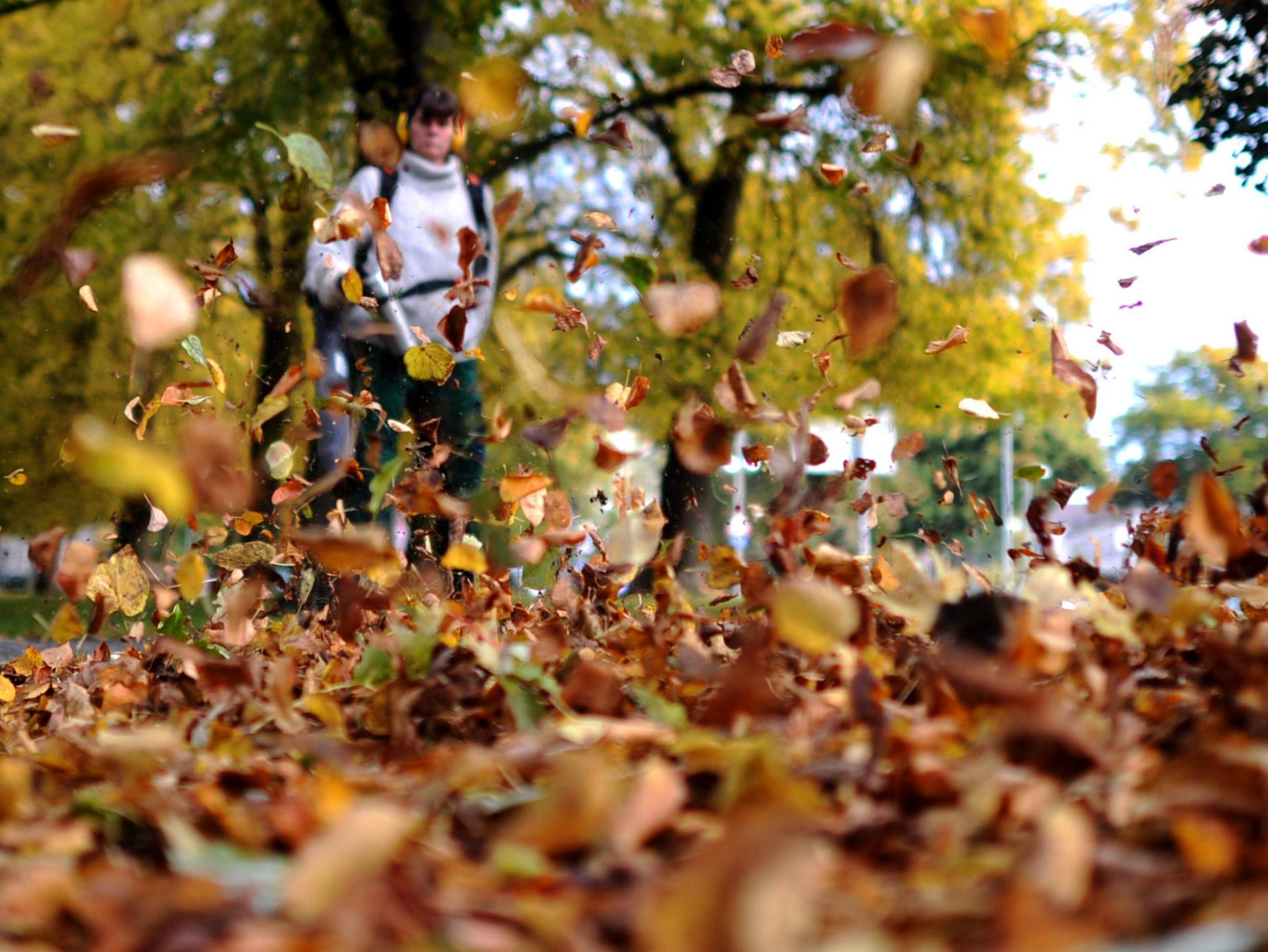 Leaf blowers 'fatal' to insects and should be avoided, German government warns