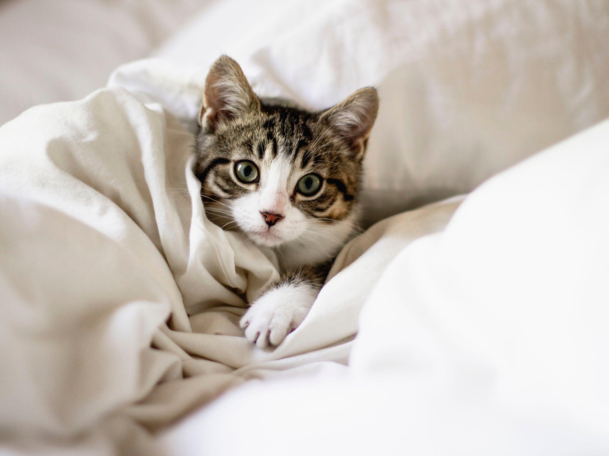 Feline fine: How to keep your indoor cat happy, according to scientists