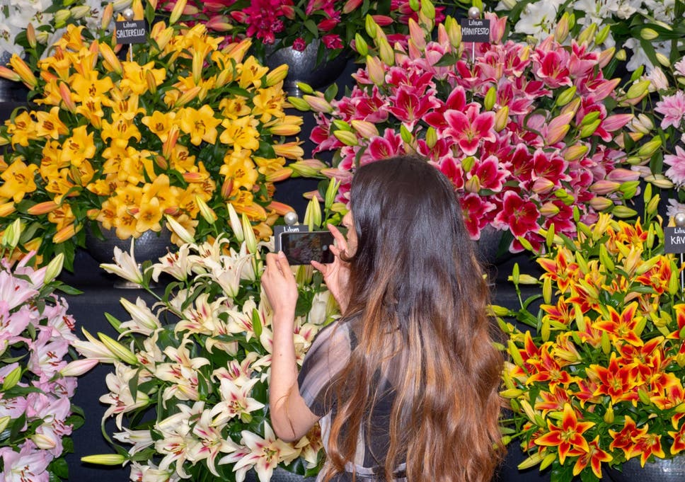 Chelsea Flower Show 2020.Chelsea Flower Show 2020 To Focus On Climate Crisis The