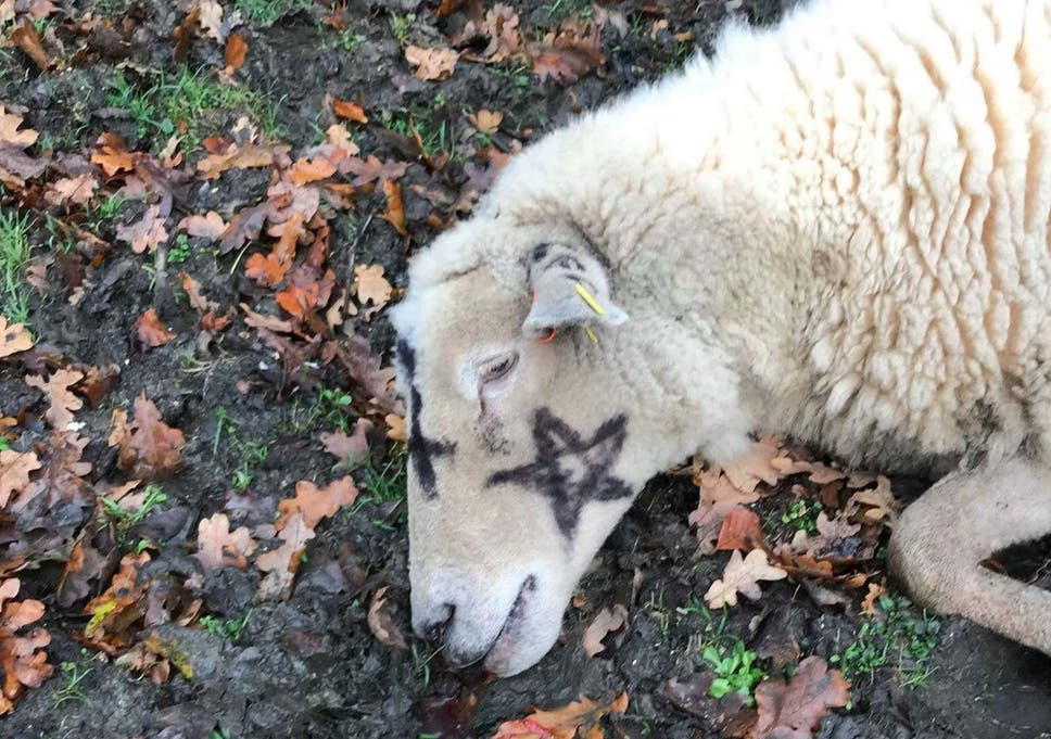Several sheep were found with occult markings painted on their bodies