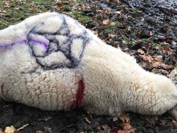 Sheep impaled on pitchfork and left next to cross in latest 'occult'…