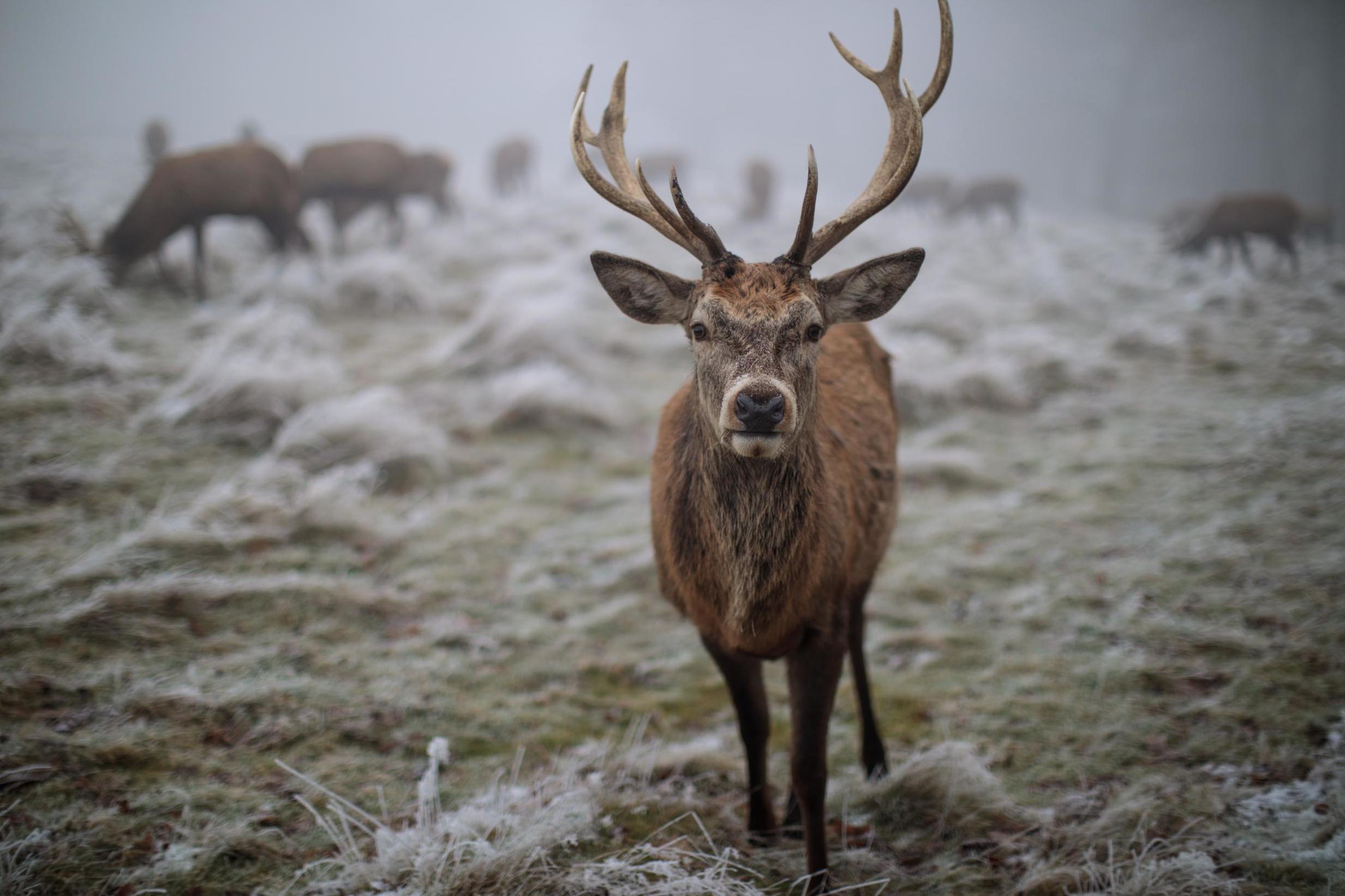 UK weather forecast: Britain set to freeze as temperatures plummet to -10C