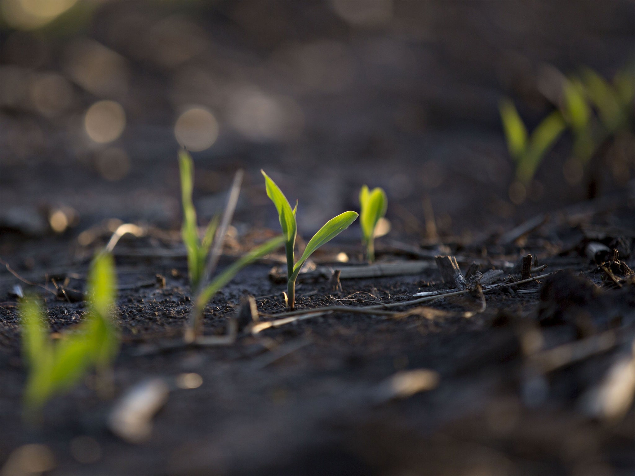 Climate change making it harder to produce viable seeds, scientists …