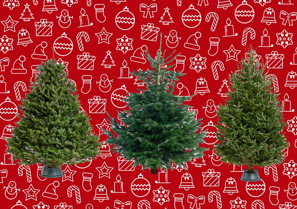 Best Real Christmas Trees That Smell Great And Don T Drop