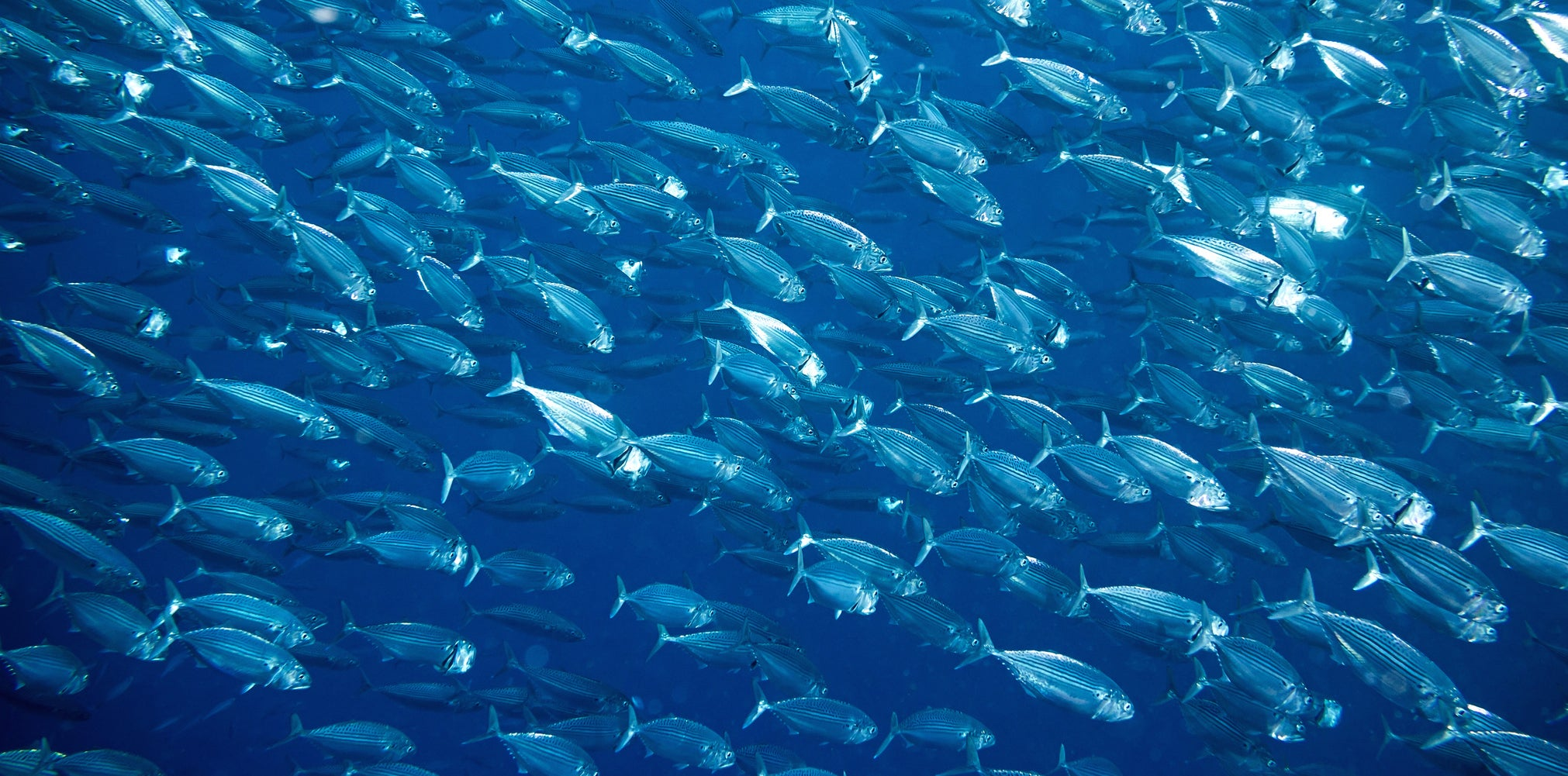 Scientists warn that the ocean is running out of oxygen – here's why…