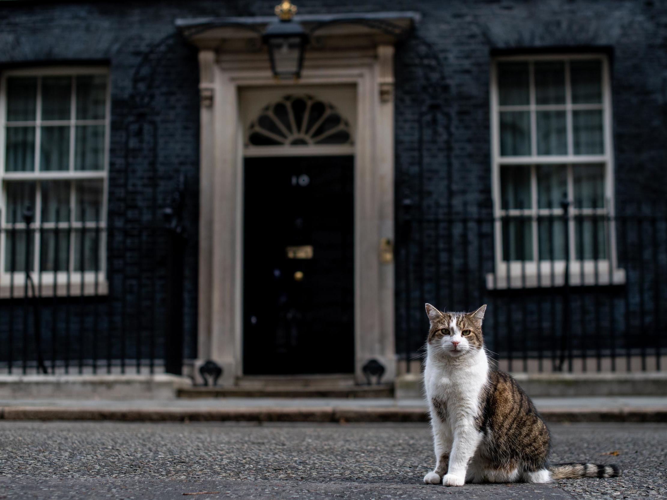 General election 2019 and animal rights: What are the