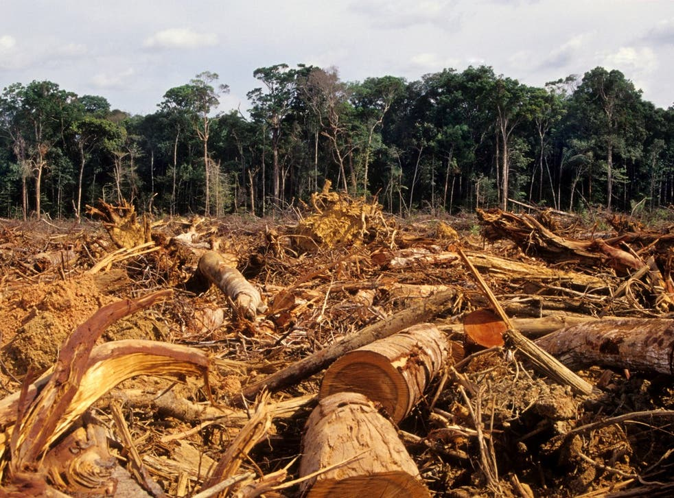 Deforestation in the Amazon has prompted increasingly violent clashes between loggers and indigenous people