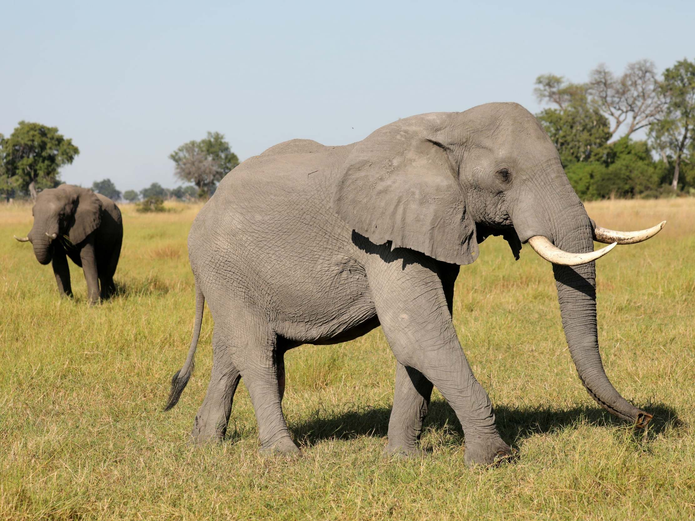 Professional hunters shoot research elephant dead and destroy collar…