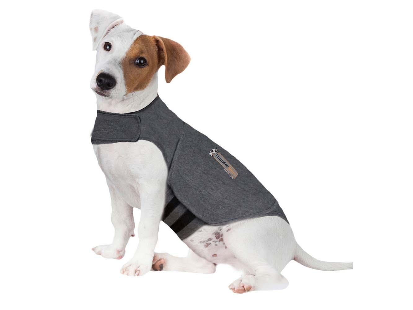The best dog coats to buy now