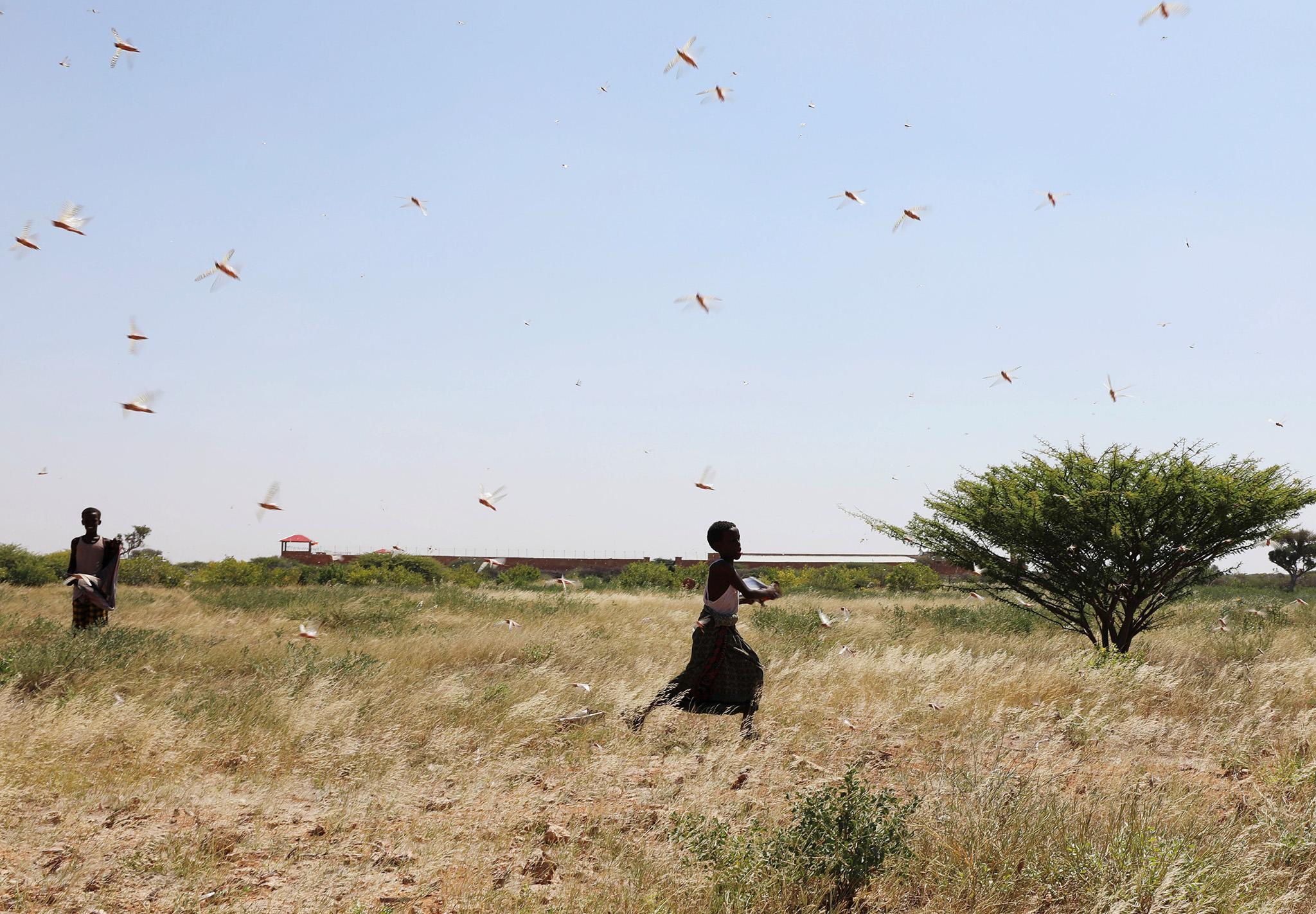 locust-invasion-somalia-5-0.jpg