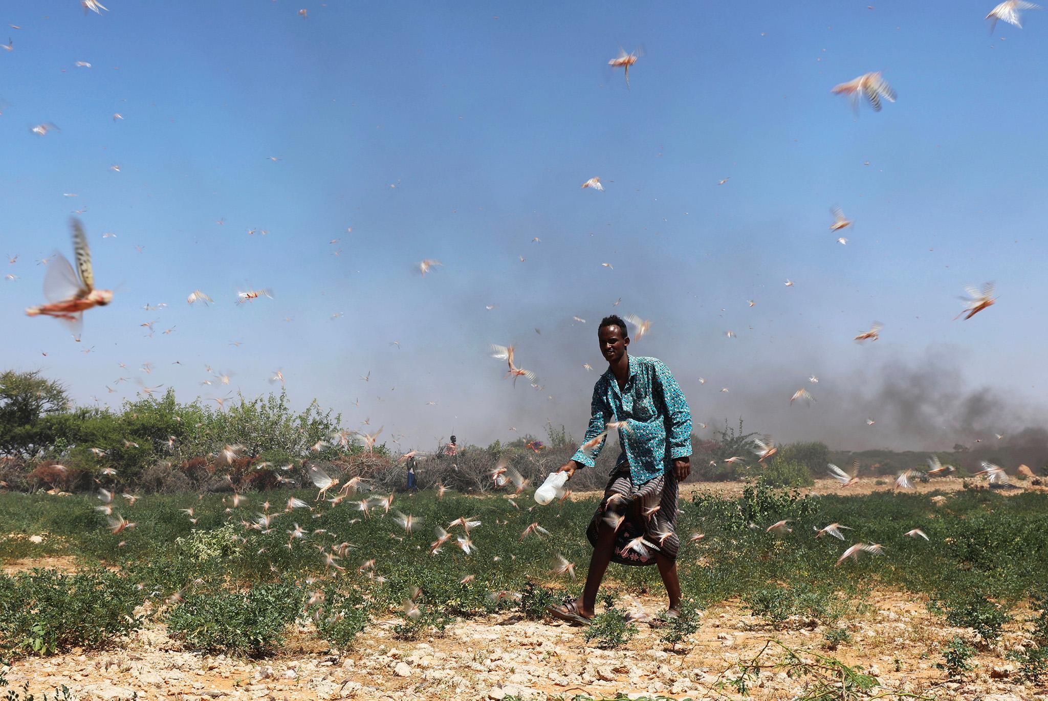 locust-invasion-somalia-8-0.jpg