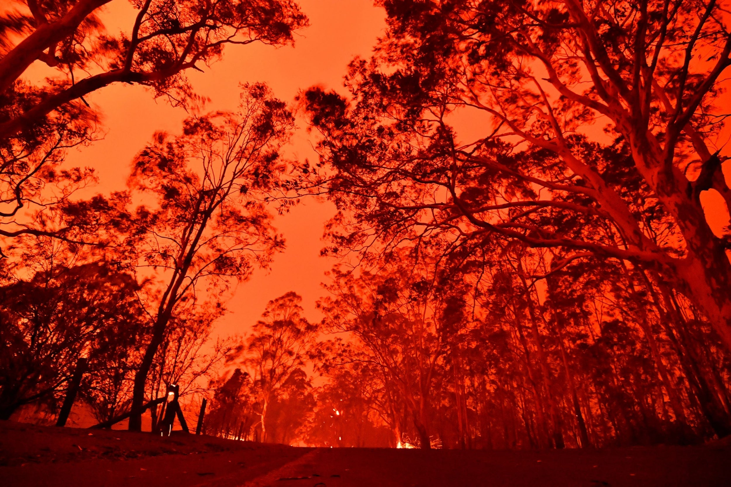 https://static.independent.co.uk/s3fs-public/thumbnails/image/2019/12/31/09/australia-bushfire.jpg