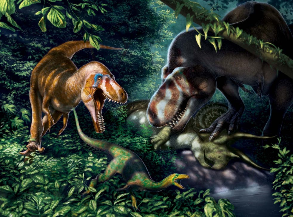 Illustration of the juvenile T rex dinosaurs, quite unlike their lumbering adult counterparts