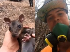 Instagram star films himself saving baby kangaroo from Australia fires