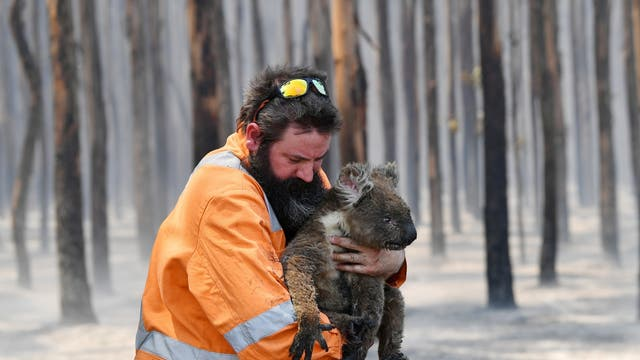 Wildlife rescuer Simon Adamczyk is seen with a koala rescued at a burning forest near Cape Borda on Kangaroo Island, southwest of Adelaide