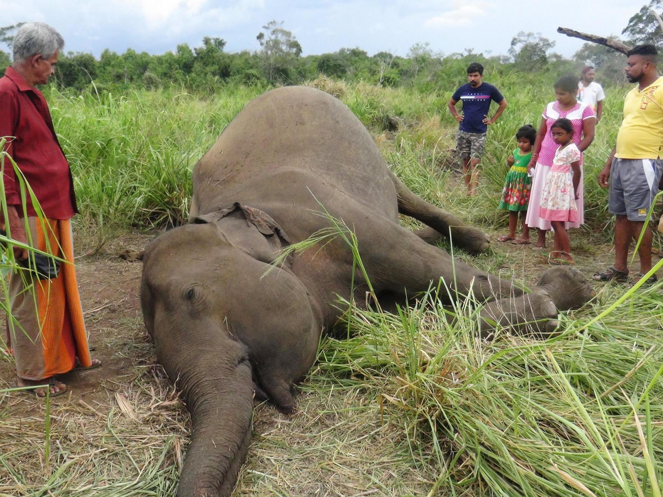 Poison and explosives used to kill elephants as record numbers die i…