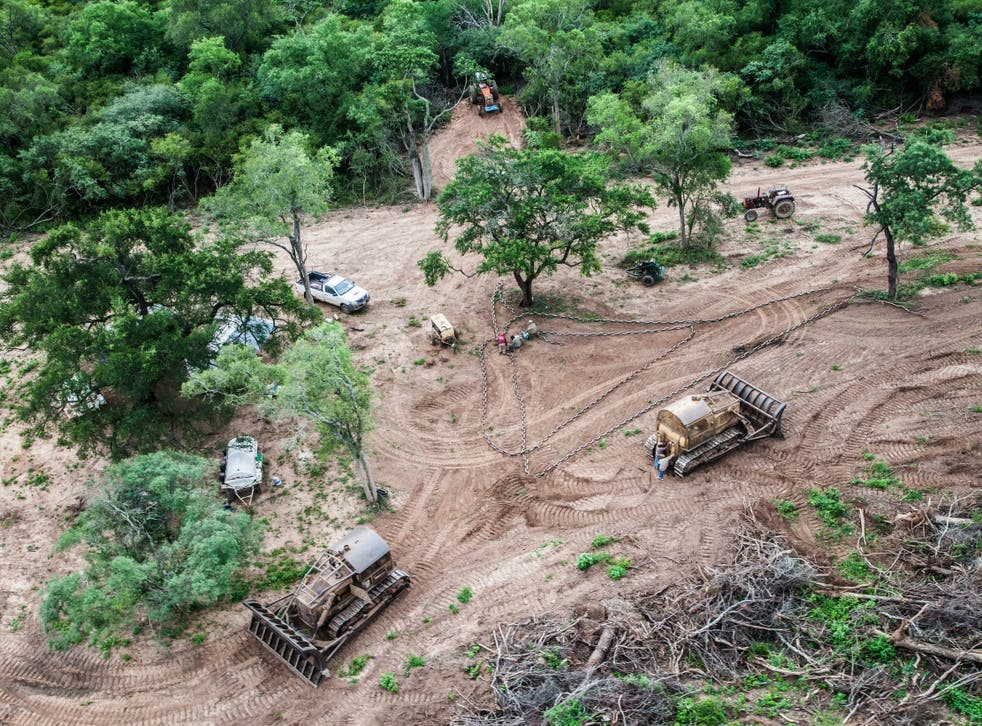 Illegal logging in Argentina, where forests are being replaced by soya plantations