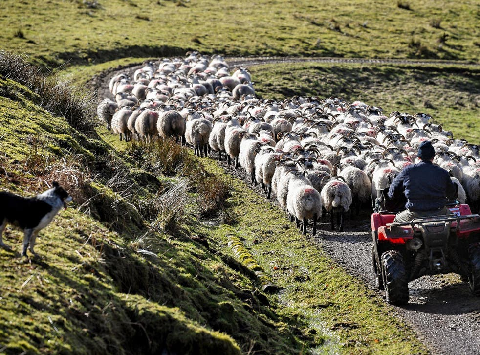 The new bill will stand as a monumental shift in British policy towards farmers post-Brexit