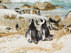 Woman apologises for getting 'too close' to penguins having sex