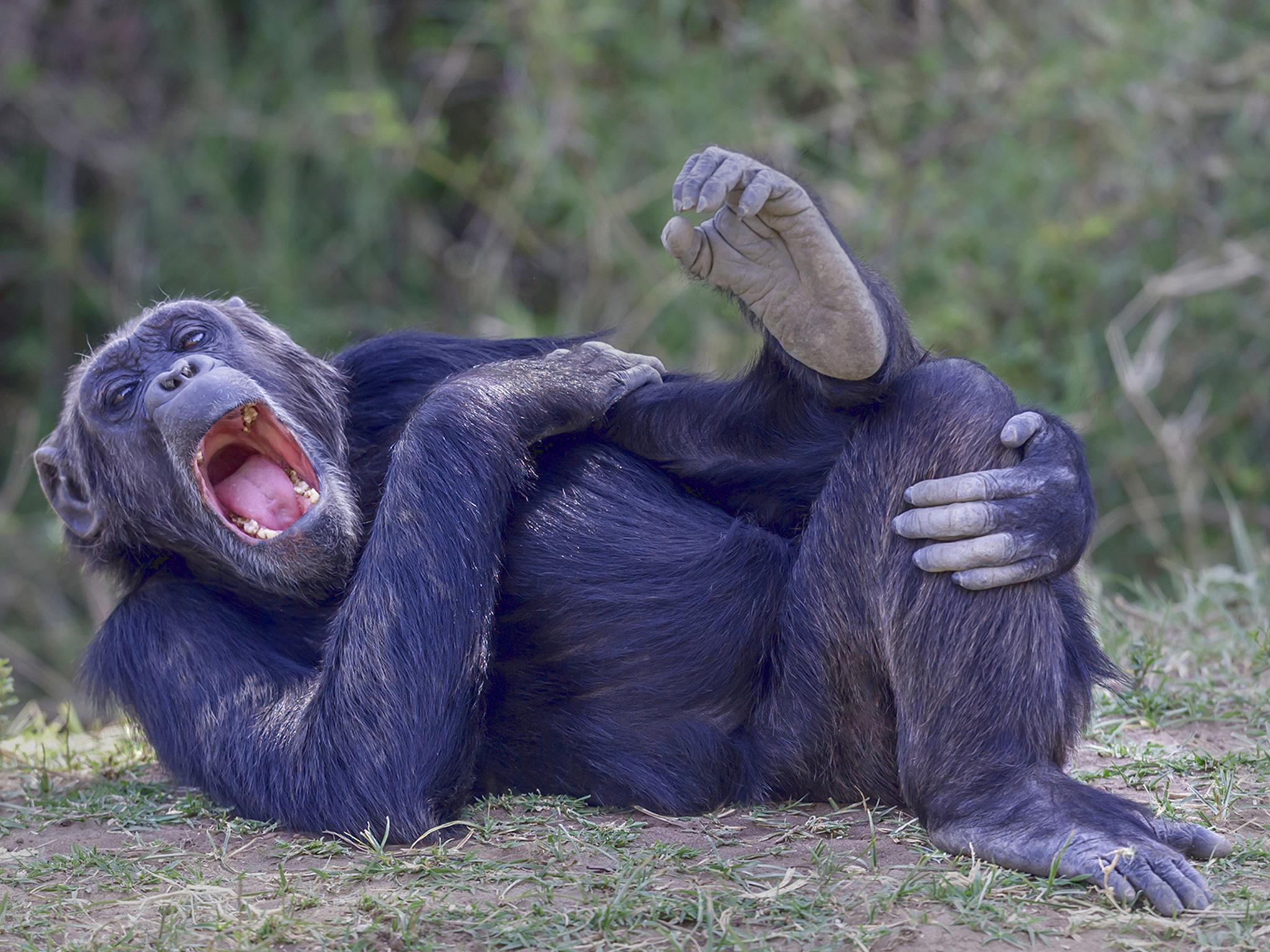 Comedy wildlife photography awards returns for 2020