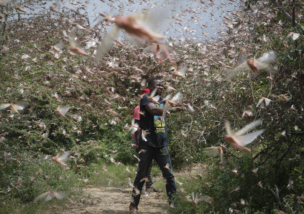 Enxames de gafanhotos devastaram colheitas, enquanto as inundações deixaram cerca de meio milhão de pessoas deslocadas