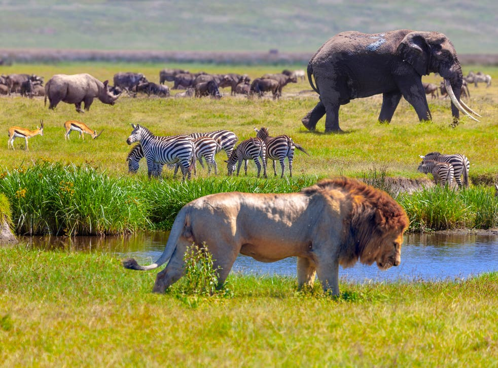 Rhino, springboks, zebra, elephant and lion in Serengeti National Park, Tanzania