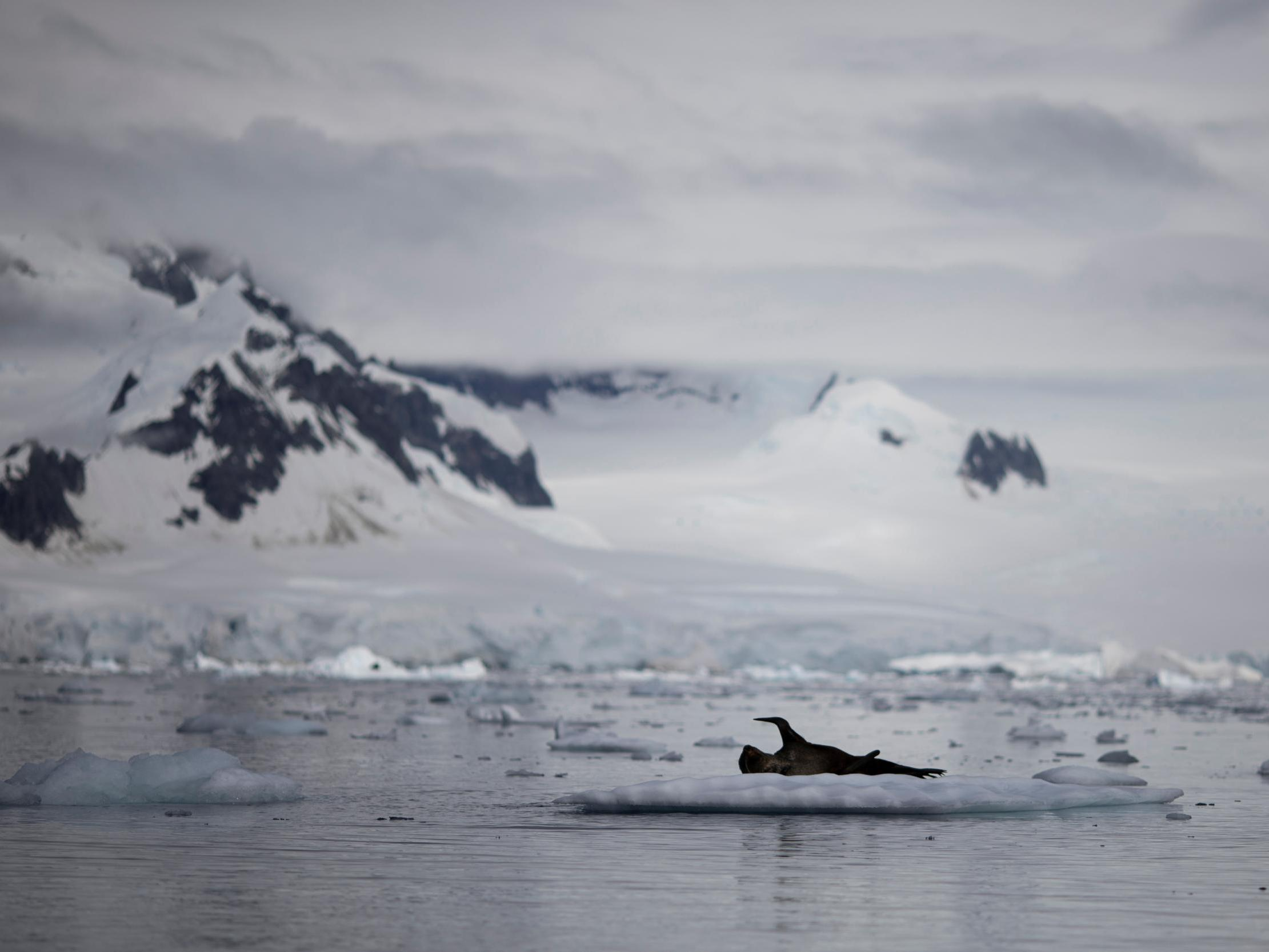 Opinion: I'm a climate scientist – this is what Antarctica's heatwaves really means for the climate crisis