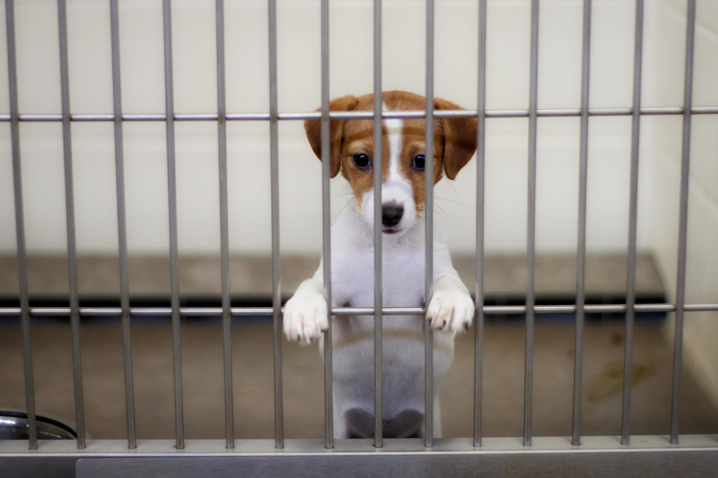 Lab animals can now be adopted instead of euthanised, FDA says