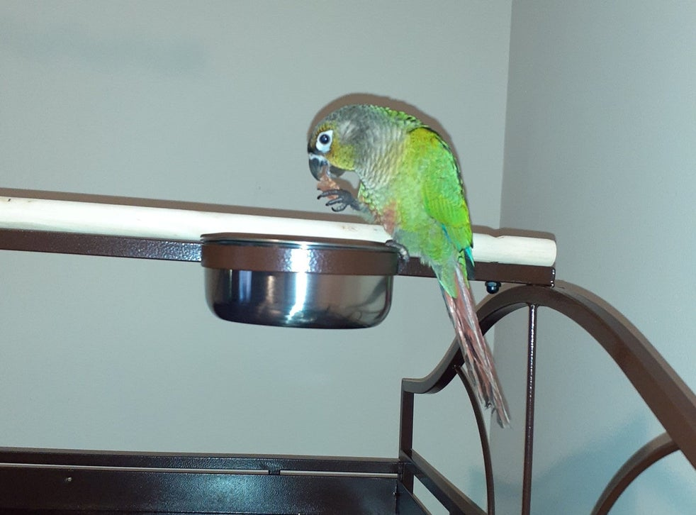 Pet Parrot Saves Family By Waking Them Up During A Fire The Independent The Independent