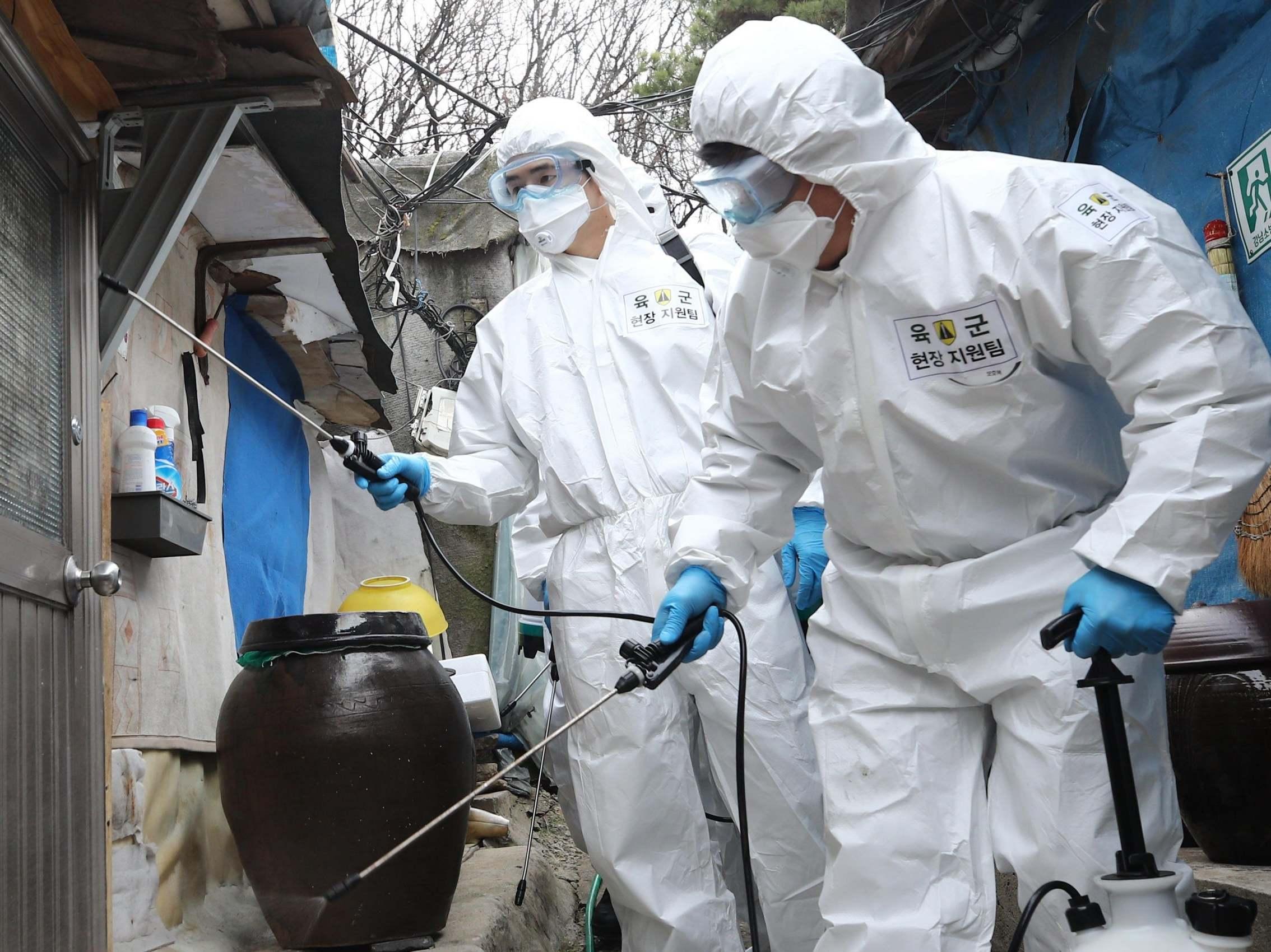 coronavirus in south korea update