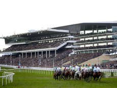 No sport is safe from coronavirus – except horse racing apparently