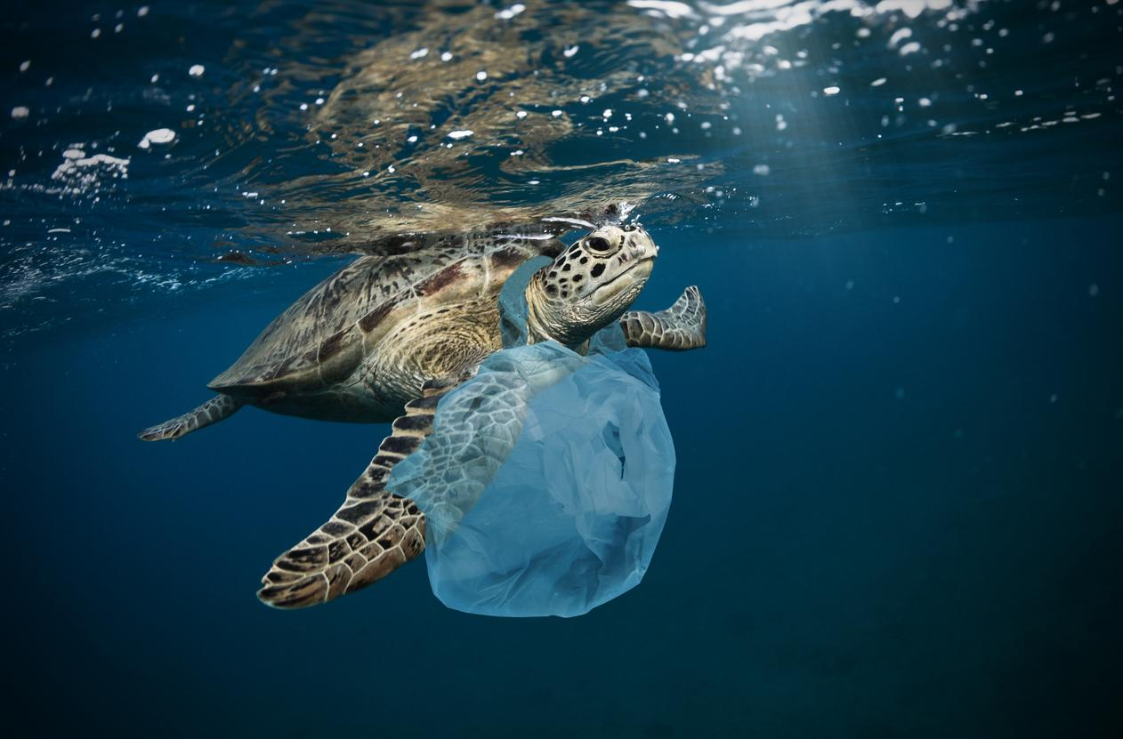 Thousands of tonnes of ocean microplastics could be blowing ashore every year with sea breeze, study finds thumbnail