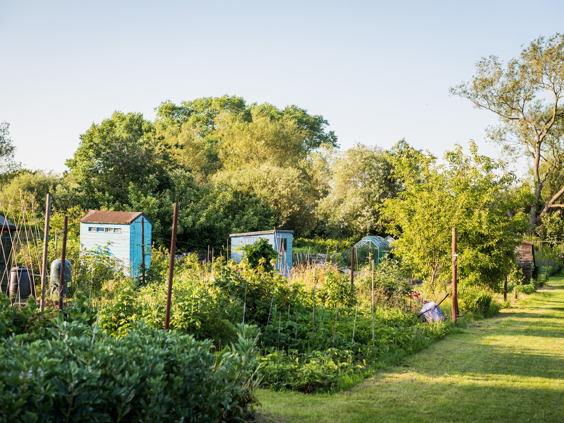As gardeners turn to growing own food, research reveals dramatic decline in urban allotments