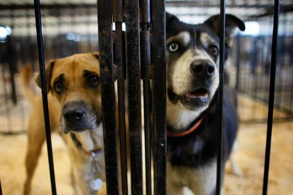 Coronavirus: Animal shelters clear out twice in one week as pets get adopted in droves - independent