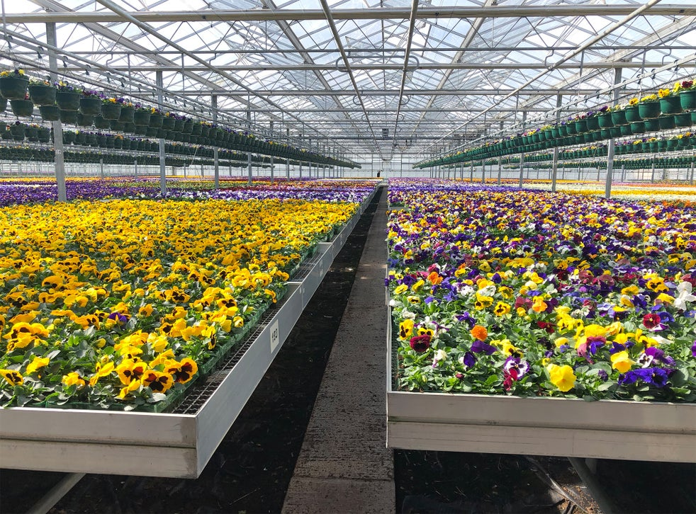 The Online Garden Centres And Nurseries To Support During Lockdown The Independent