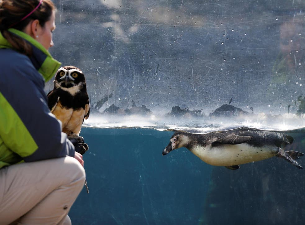 Zoos and Aquariums are struggling all over the country