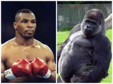 Tyson admits he once offered a zookeeper $10k to fight a gorilla