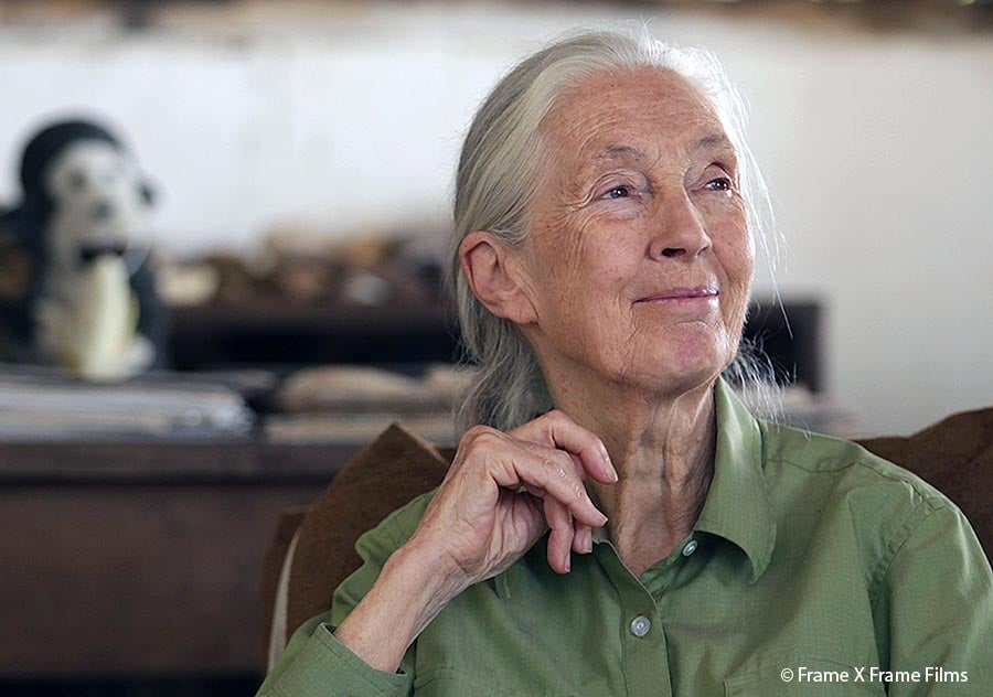 Jane Goodall calls for global ban on wildlife trade and end to 'destructive and greedy period of human history'